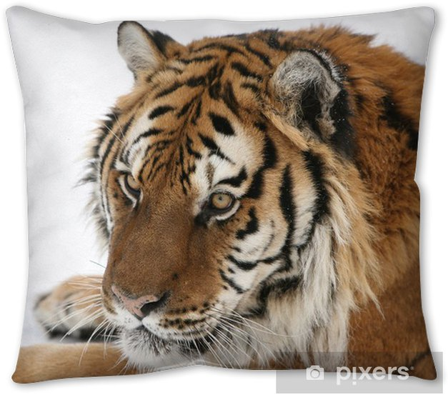 Siberian Tiger In Snow Throw Pillow Pixers We Live To Change