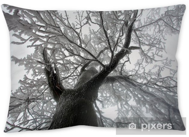 Sky Sunshine Through The Winter Treenches From Below Throw Pillow Seasons