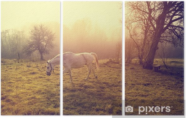 Beautiful white horse Triptych - Animals