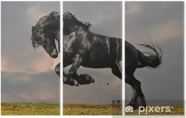 black friesian stallion gallop in sunset Triptych -