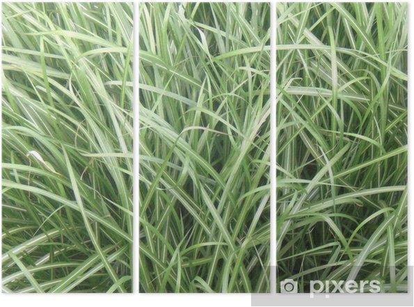 Triptychon Hohes Gras Im Sommer Pixers Wir Leben Um Zu Verändern