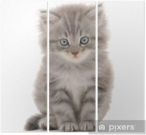 Triptych Kotě na bílém pozadí - Savci