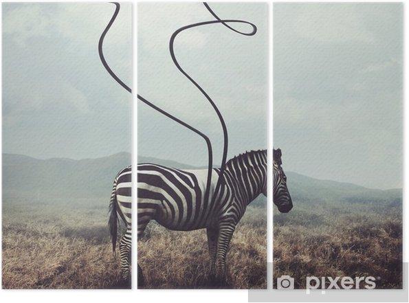 Triptych Zebra a pruhy - Zvířata