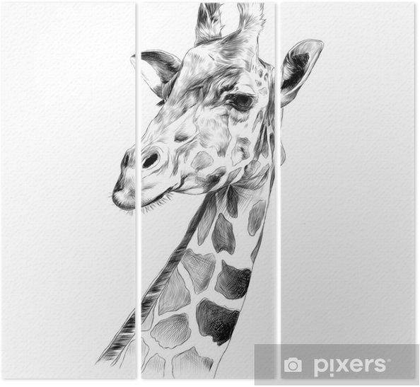 Triptyque La Tete D Une Girafe Croquis Dessin Vectoriel Graphiques