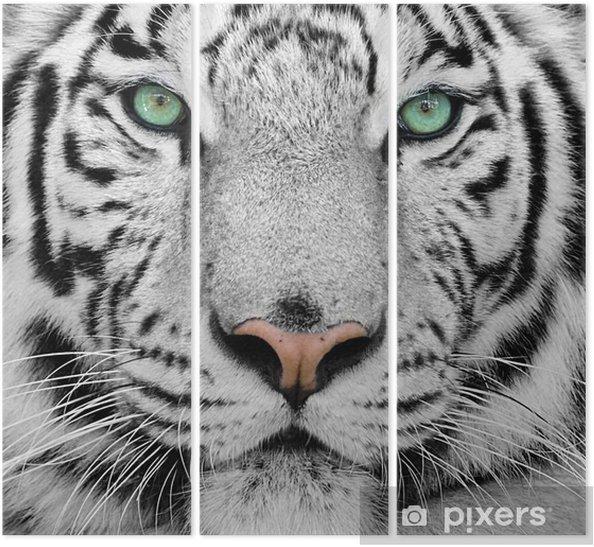 Tryptyk Biały tygrys -