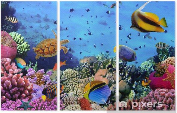 Tryptyk Zdjęcie z koralowców kolonii na Rafa, Egipt - Tematy