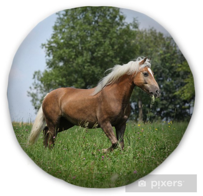 Living Room Art Cafe Social Club Kadıköy: Beautiful Haflinger Running In Freedom While Eating Grass