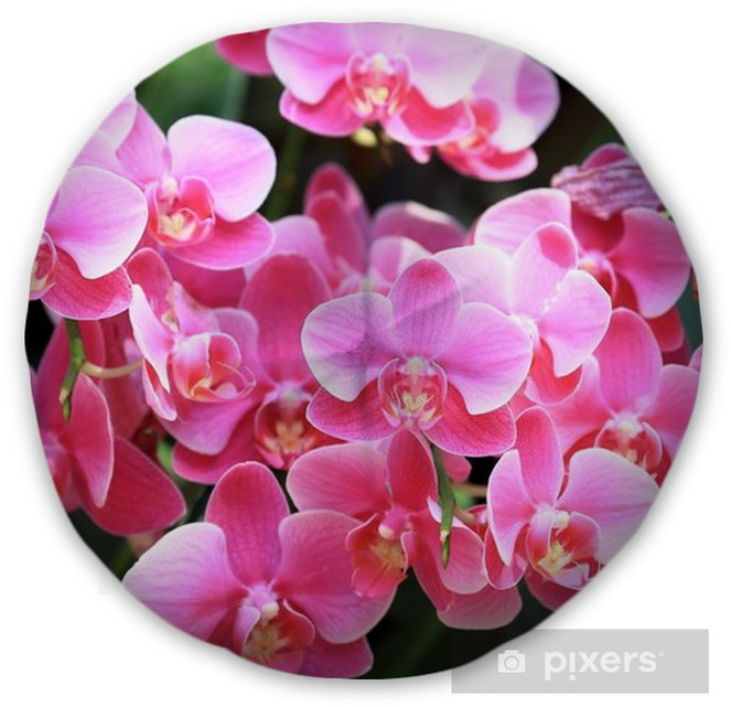 Spring Green Leaves And Flowers Background With Plants: Beautiful Pink Color Orchids Flower And Green Leaves