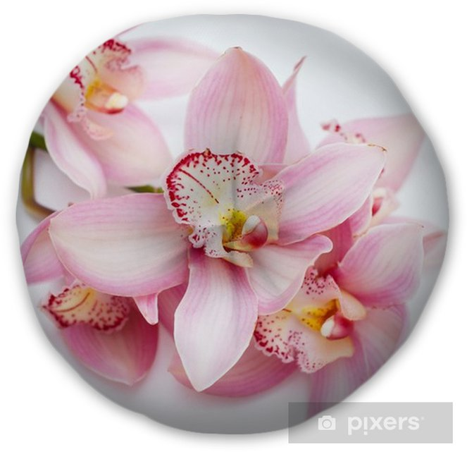 Black Flower Round Up: Beautiful Pink Orchid Flower On White Background. Pink