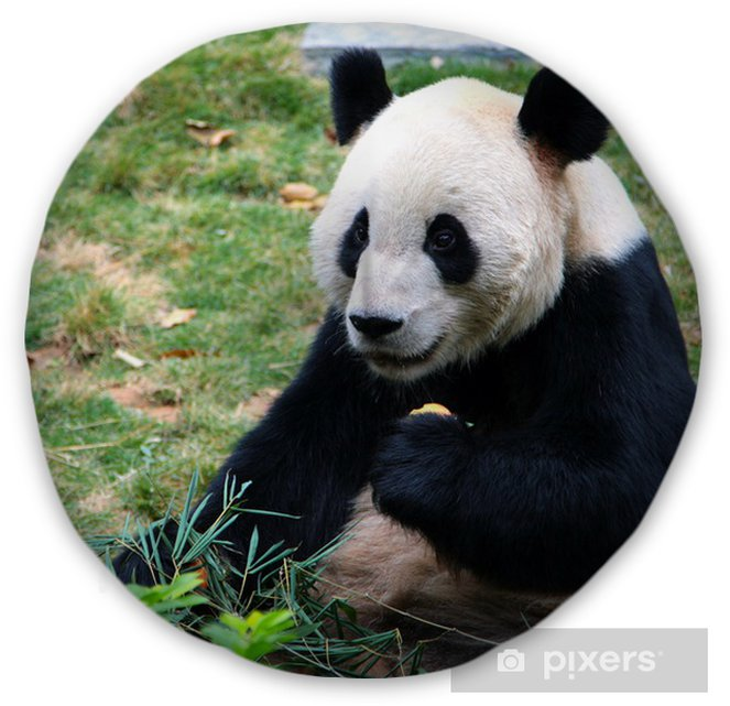 Giant Panda Eating Bamboo Tufted Floor Pillow Round