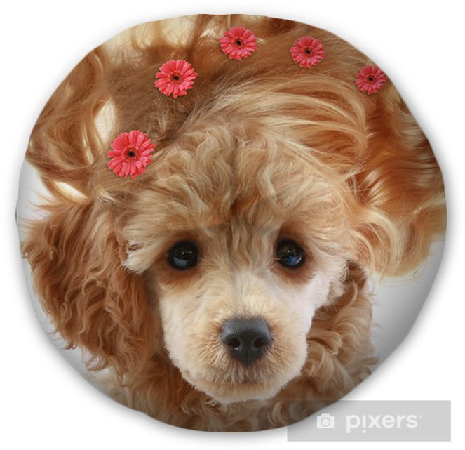 Small Apricot Poodle Puppy With Long Hair Tufted Floor Pillow Round