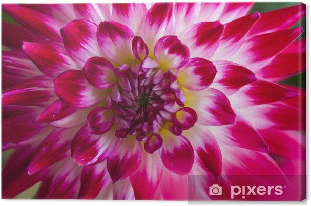 Dalya Colorl Pembe Tek çiçek Tuval Baskı Pixers Haydi Dünyanızı