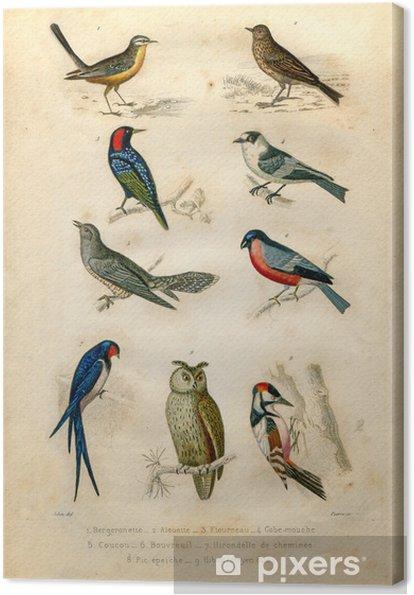 Tuval Baskı Doğal tarih: Kuşlar - Kuşlar