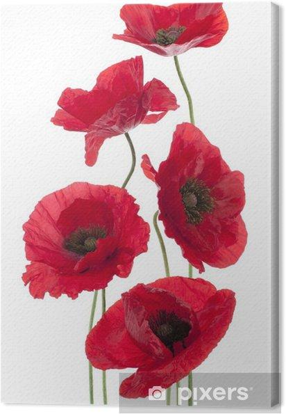 Tuval Baskı Haşhaş - Çiçekler