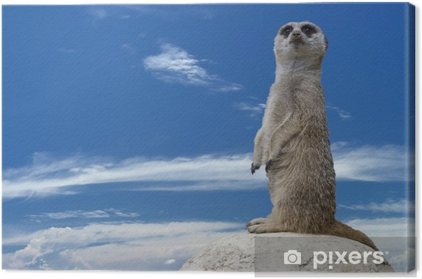 Tuval Baskı İzole meerkat size bakıyor - Memeliler