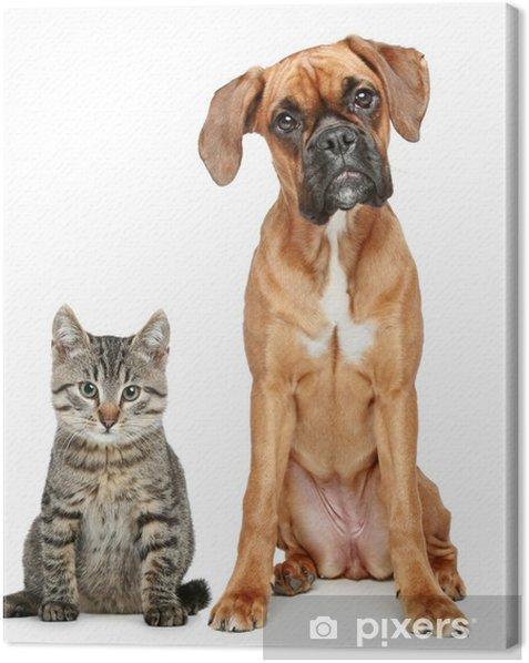 Tuval Baskı Kahverengi kedi ve köpek Boxer ırkı - Memeliler