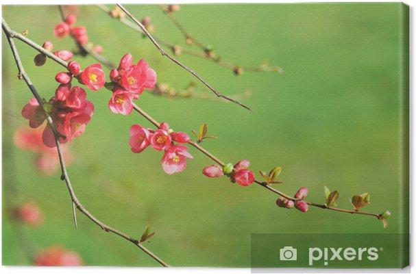 Kırmızı çiçekli Ayva Dalı Tuval Baskı Pixers Haydi Dünyanızı
