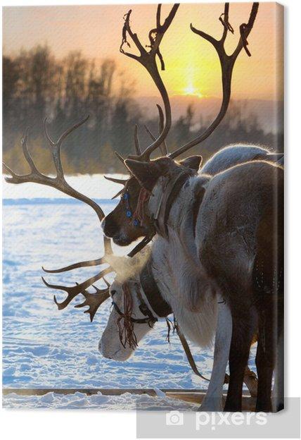 Tuval Baskı Kuzey geyik -