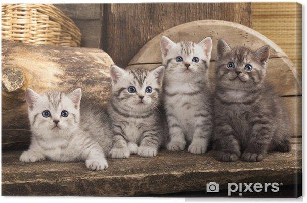 Tuval Baskı Retro arka plan üzerinde İngiliz kedi yavrusu -