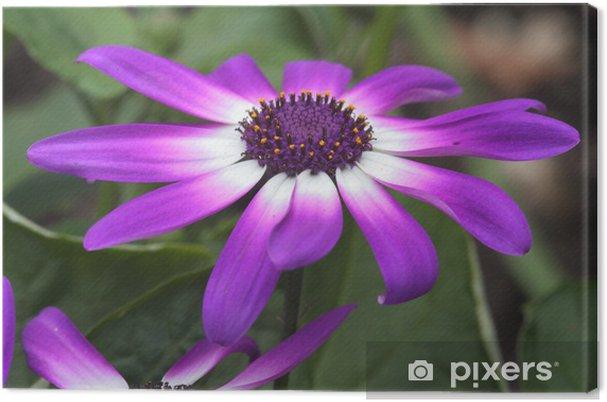 Tek çiçek Senetti Tuval Baskı Pixers Haydi Dünyanızı Değiştirelim