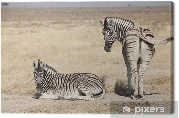 Tuval Baskı Zebra Grubu -