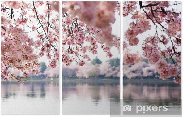 Üç Parçalı Washington DC deprem Havzası üzerinde Kiraz Çiçekleri -