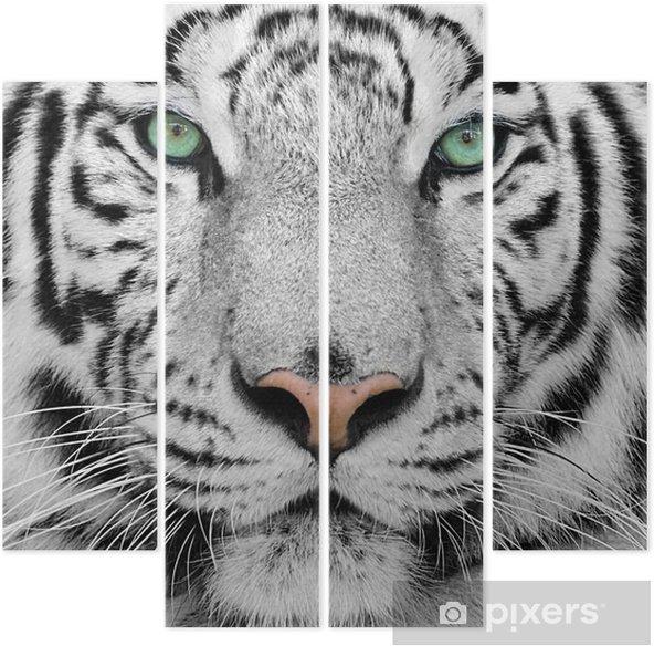 Vierluik Witte tijger -