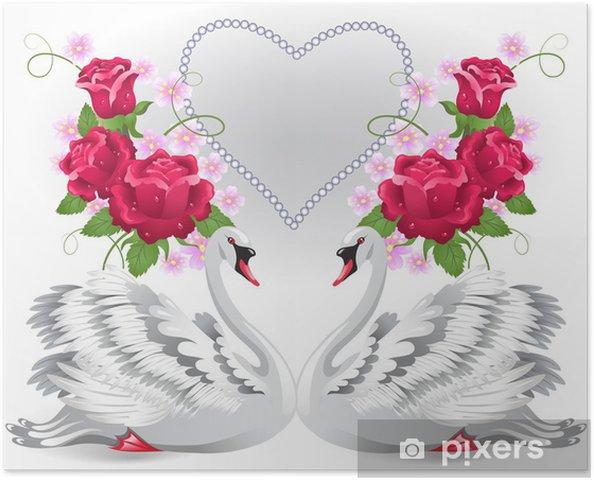 Zelfklevende Poster Elegante witte zwanen - Zwanen