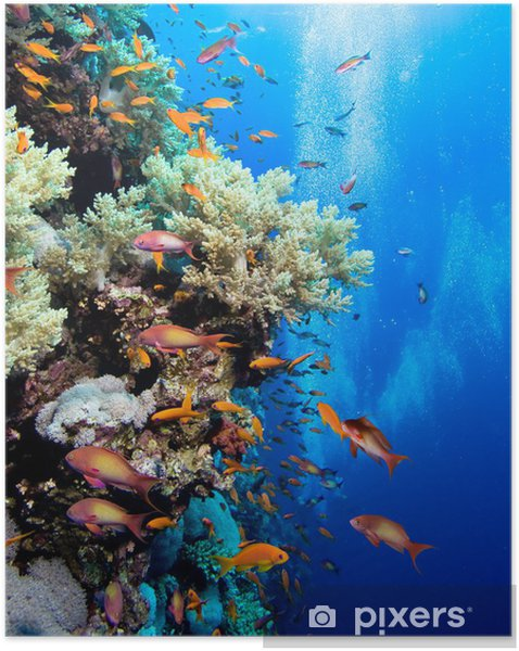 Zelfklevende Poster Foto van koraal kolonie - Vis