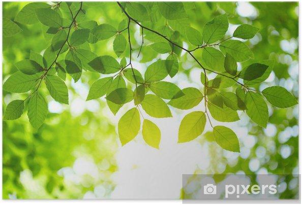 Zelfklevende Poster Groene bladeren achtergrond - iStaging