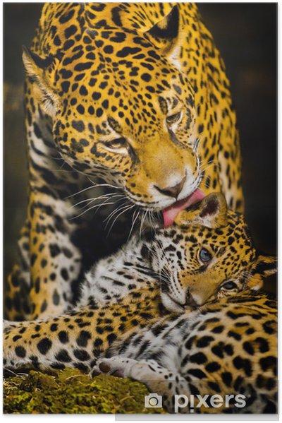Zelfklevende Poster Jaguar Welpen - Het Leven