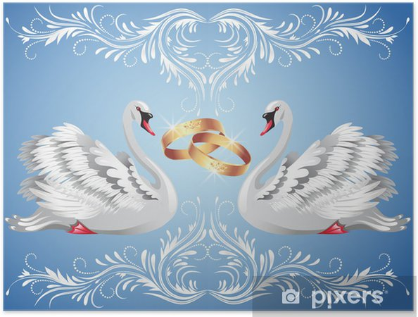 Zelfklevende Poster Trouwringen en twee zwanen - Zwanen