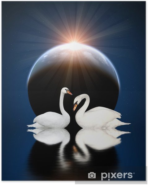 Zelfklevende Poster Twee zwanen - Zwanen