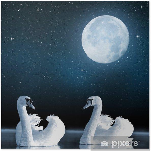 Zelfklevende Poster Zwanen op het meer in de nachtelijke hemel. - Zwanen