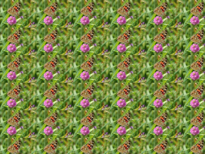 Vinylová Tapeta Painted Lady (Vanessa cardui) na jetele květ. makro - Témata