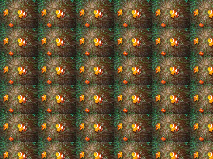 Vinyl Behang Tropische familie van clownvissen - Onderwater