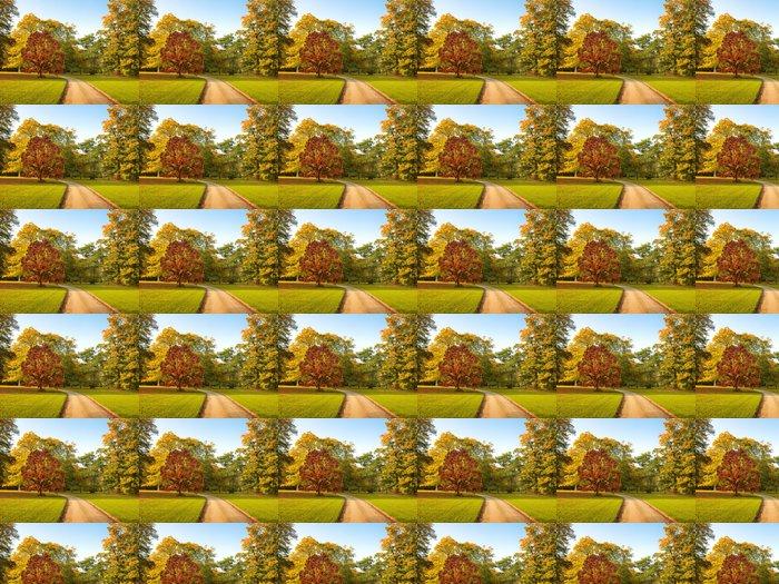 Vinylová Tapeta Cesta v parku na podzim. Podzimní krajina. - Roční období