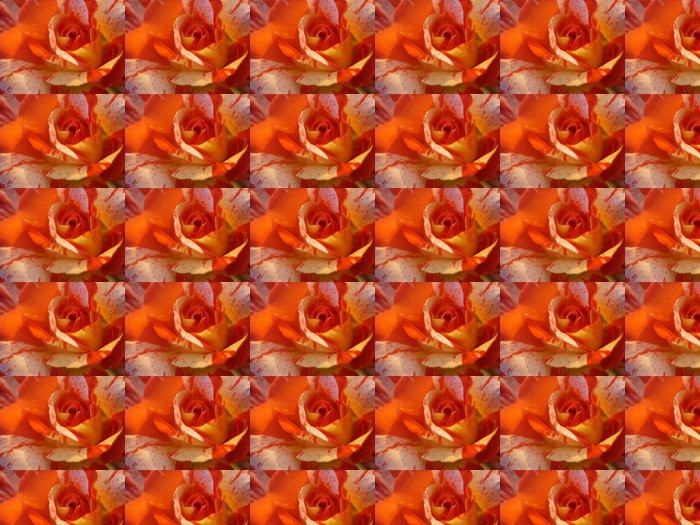 Variegated orange rose Vinyl Wallpaper - Happiness