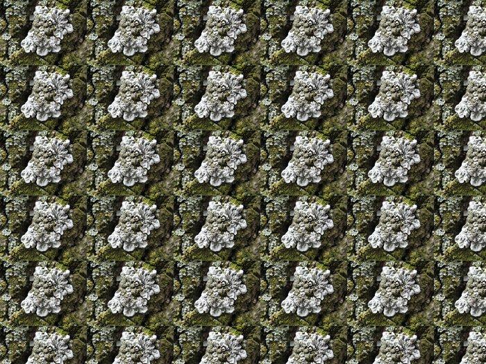 Vinylová Tapeta Mech na kůře - Rostliny