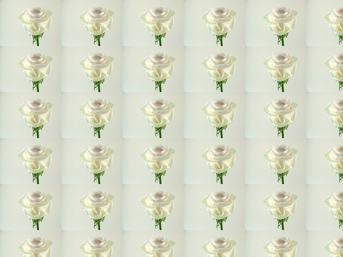 Vinylová Tapeta Single bílé růže zblízka - Štěstí