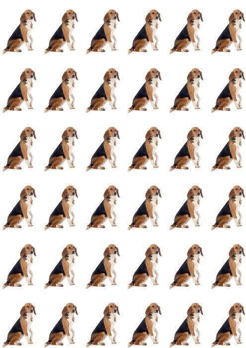 Vinylová Tapeta Beagle Harrier - Savci