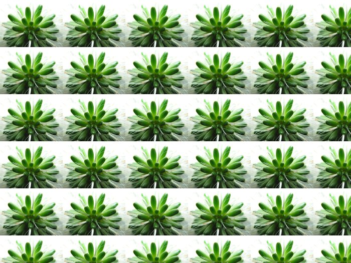 Vinylová Tapeta Kaktus - Květiny