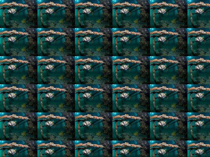 Vinylová Tapeta Blotched porcupinefish - Diodon liturosus - Vodní sporty