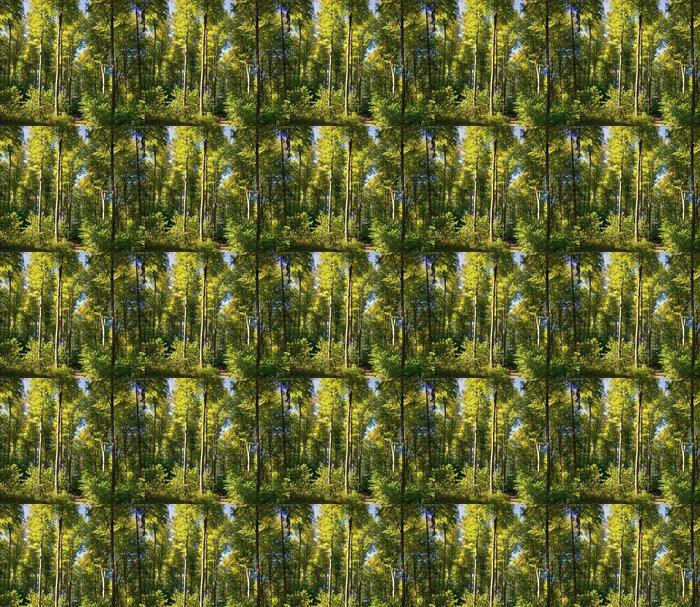 Vinylová Tapeta Buk lesní - Přírodní krásy