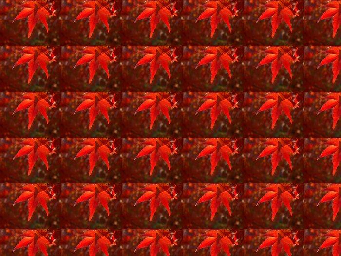 Vinylová Tapeta Red podzimní listí v parku v Kjótu, Japonsko - Roční období