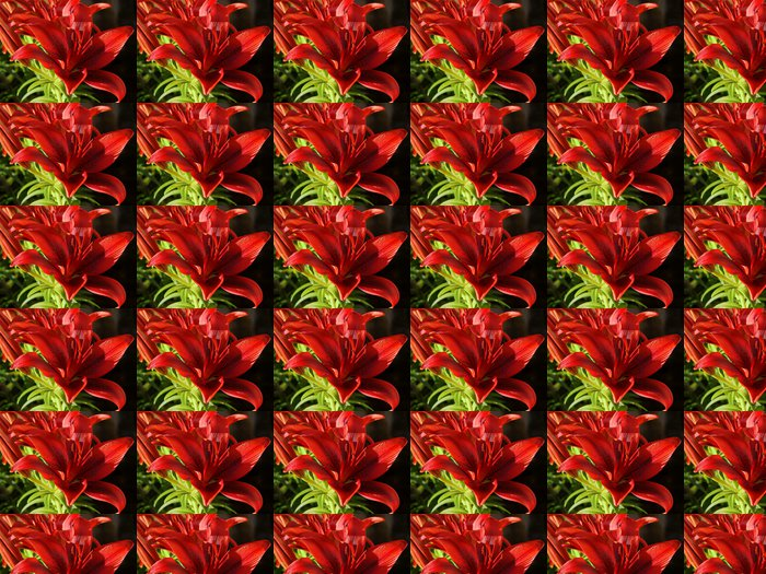 blood-red ,pretty lilies Vinyl Wallpaper - Flowers