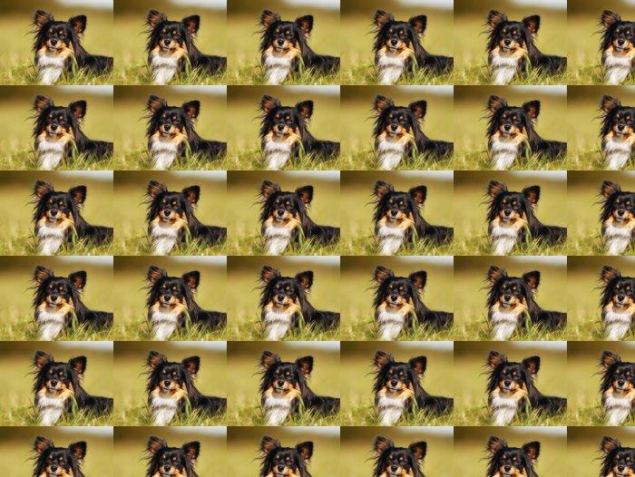 Vinylová Tapeta Chihuahua - Portrét - Savci