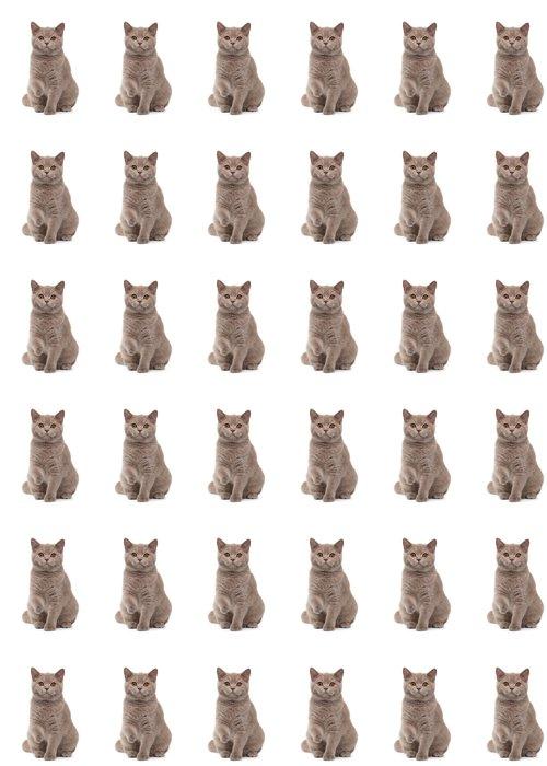 Vinil Duvar Kağıdı Beyaz zemin üzerine genç ingiliz kedi yavrusu -