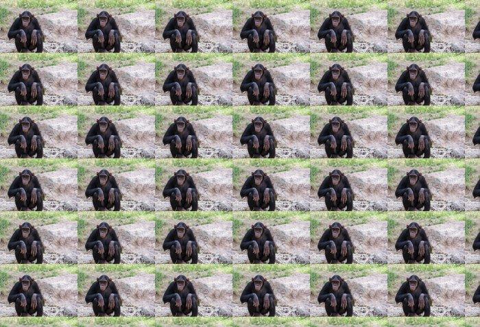 Vinylová Tapeta Šimpanz sedí na kamenech - Savci