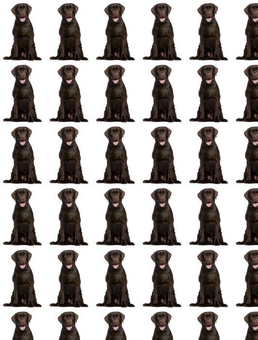 Vinylová Tapeta Labradorský retrívr, 7 měsíců starý, sedící - Savci